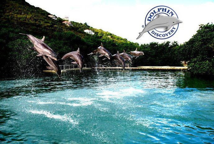 Swim With Dolphins Cancun Cancun All Inclusive Resorts